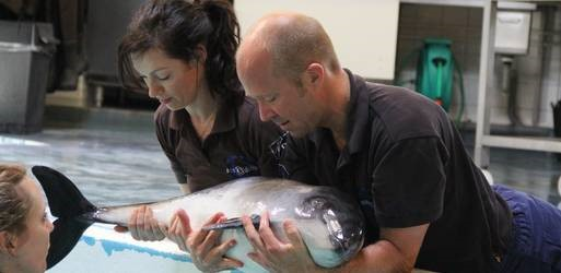 actrice miyanne van reeden adopteert dolfijntjes