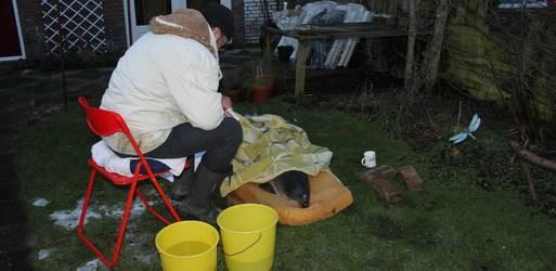 bruinvis arnold overleden