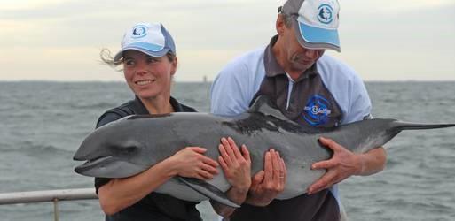 bruinvis sienke weer terug in noordzee