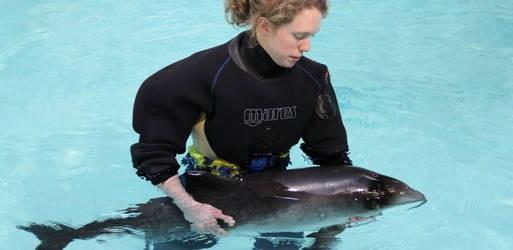 levende bruinvis aangespoeld op schiermonnikook
