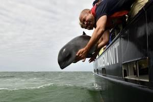 Ireen terug in zee