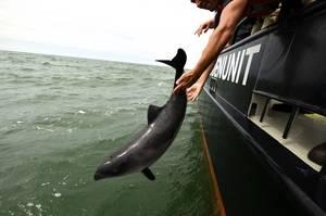 Bruno terug in zee